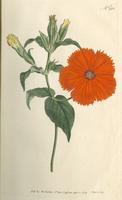 Botanical Magazine