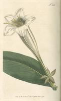 Botanical Magazine