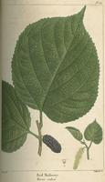 The North American sylva ; or, A description of the forest trees of the United States, Canada and Nova Scotia